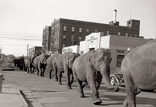 Photo of Special – The Chipperfields Circus – Elephant Act – Host Zero Mostel