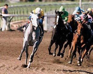 Photo of Horse Racing – 1986 Breeders Cup – Santa Anita Park – Host Dick Enberg – Part 1