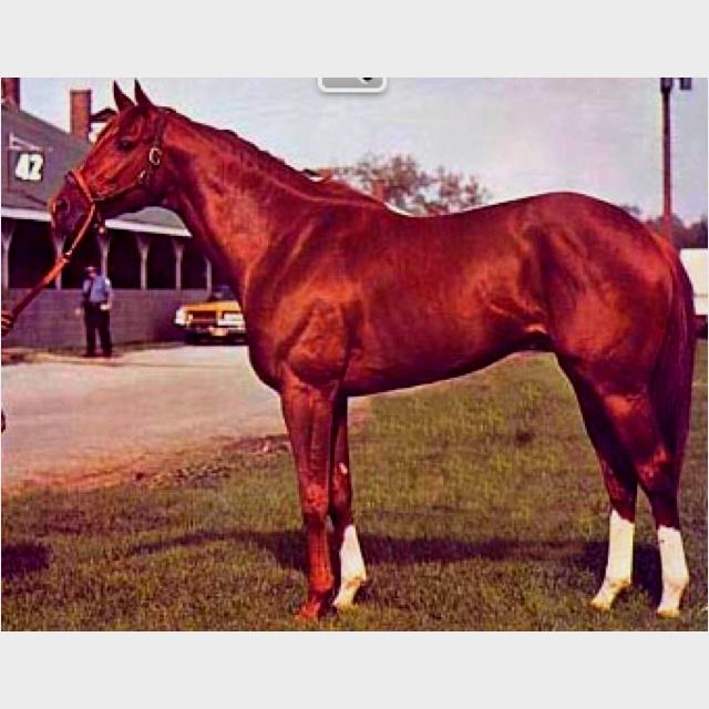 Photo of Horse Racing – 1982 – NBC Special – Bob Costas Salutes Triple Crown Winner Secretariat