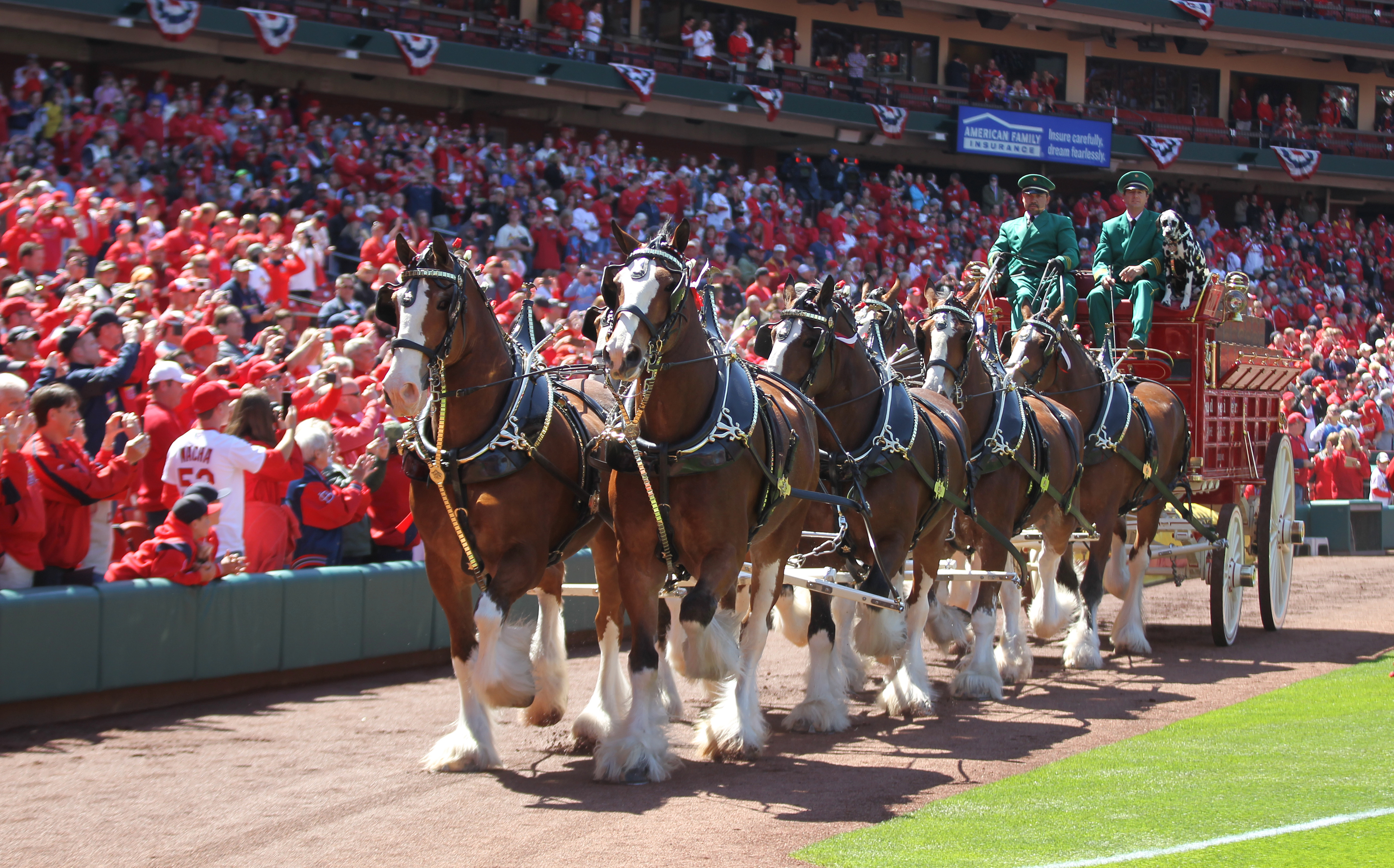Photo of MLB – 1985 – The Budweiser Clydesdales At Busch Stadium For World Series Game 3 With Royals Vs Cardinals