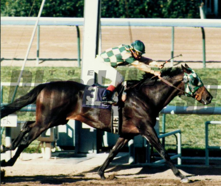 Photo of Horse Racing – 1988 – The Breeders Cup – Classic Race – Skywalker 1st + Turkoman 2nd + Precissionist