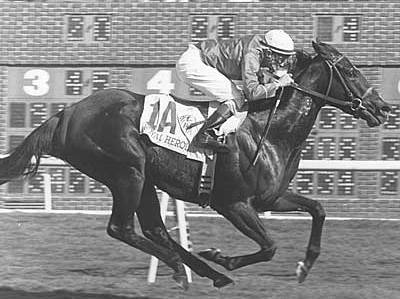 Photo of Horse Racing – 1984 – Highlights – Breeders Cup Mile 1st Royal Heroine + Profile Of Northern Dancer