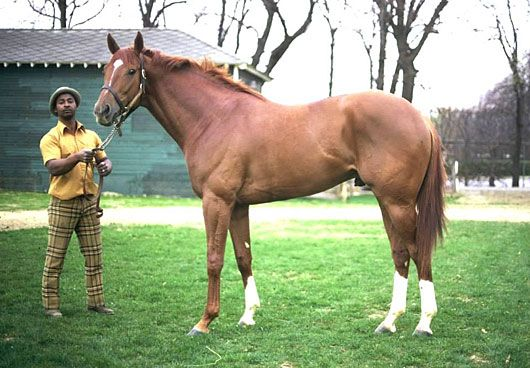 Photo of Horse Racing – 1983 – Actor Telly Savalas Pays Homage To The Great Big Red Horse Secretariat